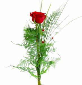 Pikk punane roos
