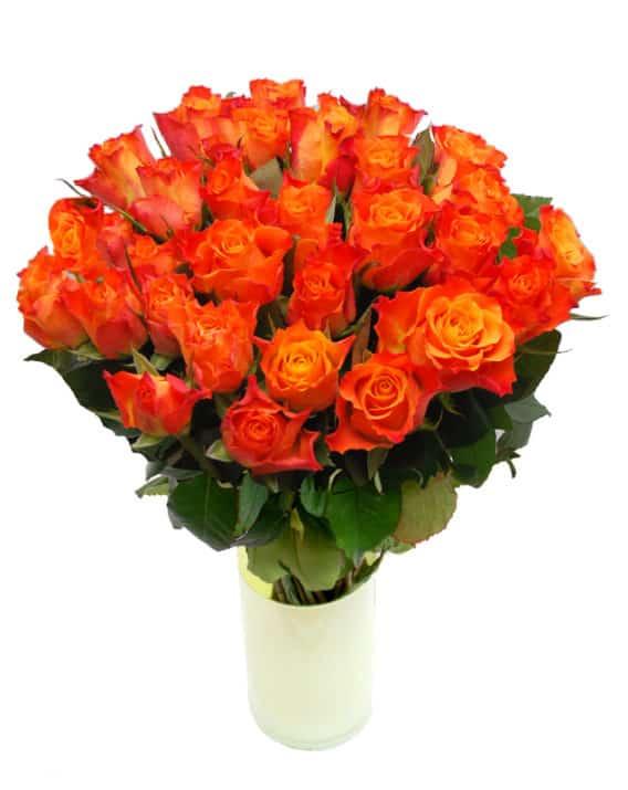 Oranž roos 70cm