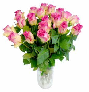 Roosa roos 70cm