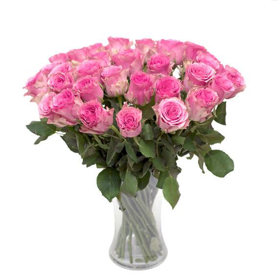 Roosa roos L017