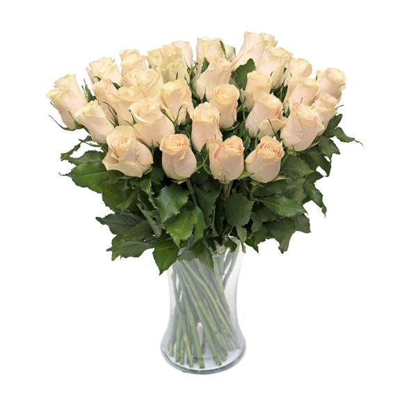 Kreem roos L018