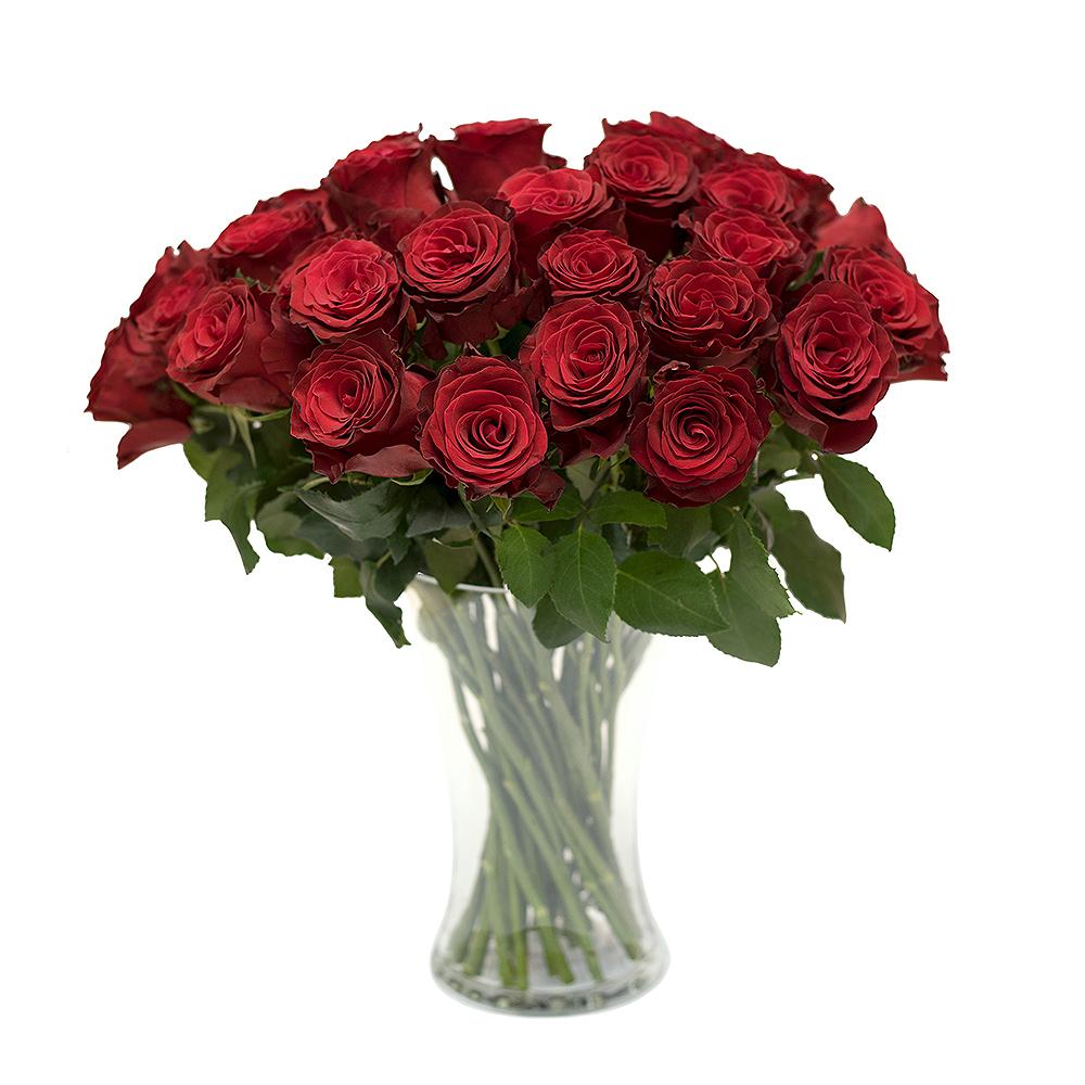 Punane roos L019