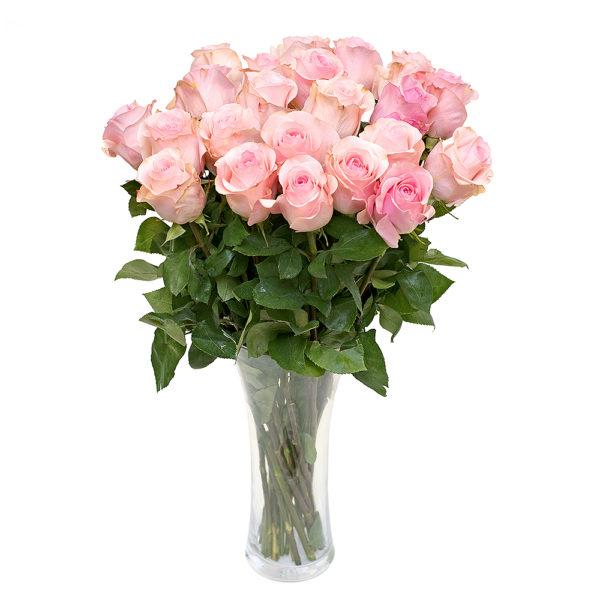 Roosa roos L021