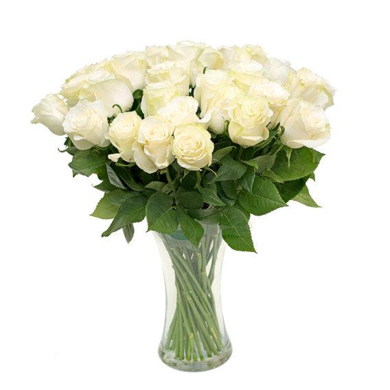 Valge roos L023