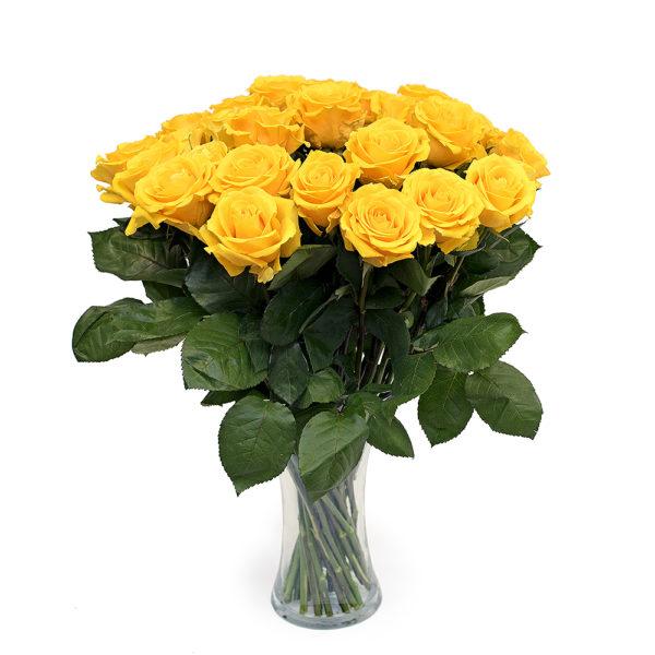 Kollane roos L024
